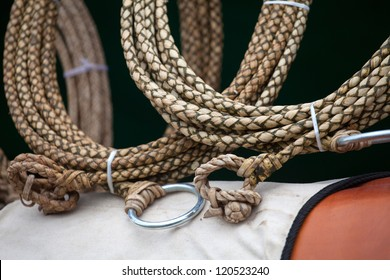 Roping Horse Images Stock Photos Amp Vectors Shutterstock
