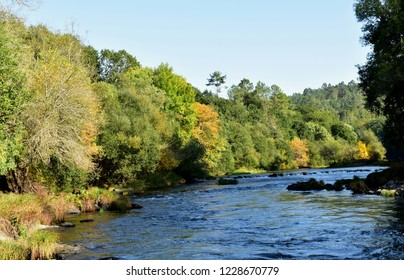 Atumn colours in the forest. Background with river and trees, sun light and shadows. Green, blue and yellow colours. Galicia, Spain. Blue sky, sunny day.