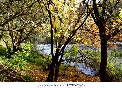 Atumn colours in the forest. Background with river, trees, path and exuberant vegetation. Yellow and brown leaves on the ground. Ferns and foliage, trunks and branches. Galicia, Spain, sunny day.