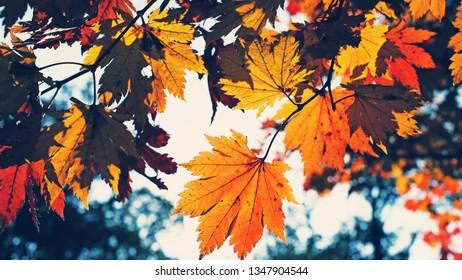 Atumn Foliage - 02