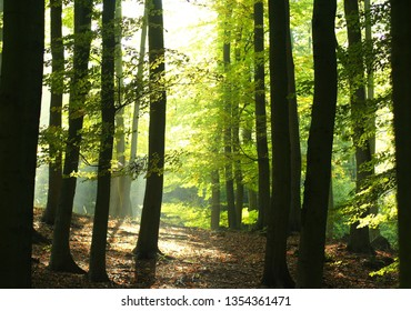 Atumn forest in the middle Europe, CZech republic