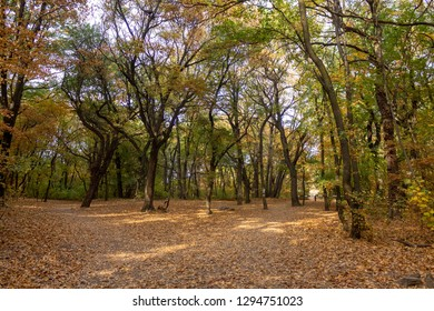 Atumn forrest leaves