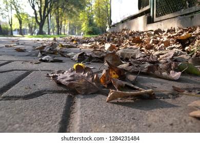 Atumn on the street
