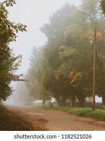 Atumn tree and fog