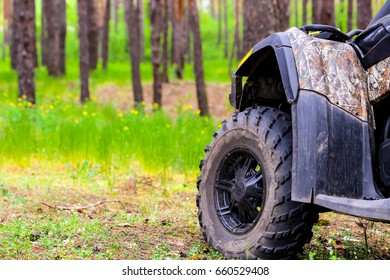 ATV Quadbike in a pine forest. Summer time