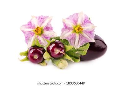 Aubergine with aubergine flower, isolated on white background. Eggplant vegetable.