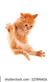 Auburn kitten jumping. Isolated.