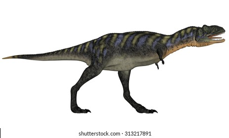 Aucasaurus dinosaur walking roaring isolated in white background - 3D render