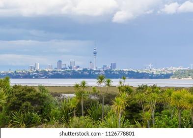 Auckland city view from the Waitemata salt marsh,New Zealand.
