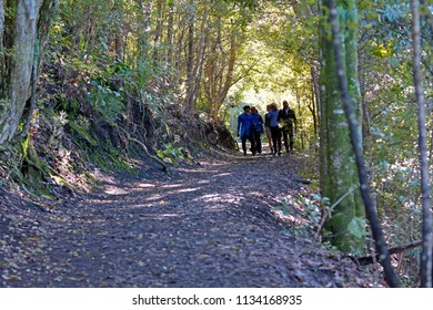 AUCKLAND - JULY 12 2018:Group of tourists trekking in Rangitoto volcanic island an iconic landmark of Auckland, New Zealand.