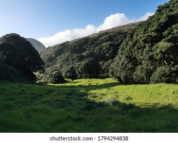 Auckland / New Zealand - August 12 2020: View of sunlit glade in coastal bush