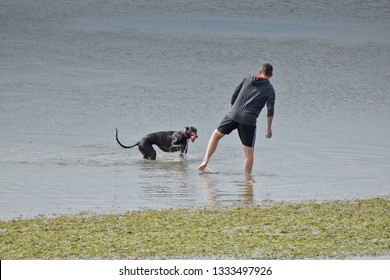 Auckland / New Zealand - March 09 2019: Man plays with a dog in water