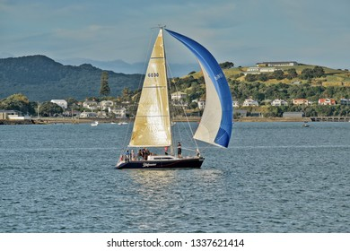 Auckland / New Zealand - March 13 2019: Small yacht sailing with full spinnaker in Waitemata Harbour with Devonport houses in the background