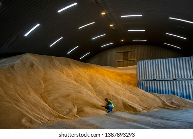 Auckland, New Zealand, March 13, 2019: An unidentified worker checks animal feed pellets, inside a huge storage shed at MainFeeds, New Zealand's largest privately owned feed milling company.