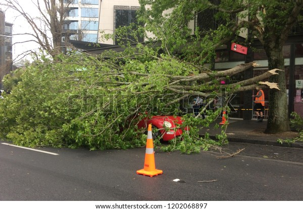 AUCKLAND - OCT 12 2018:Tree crashed on a car in Queen Street due to a very high winds and bad weather in Auckland, New Zealand.