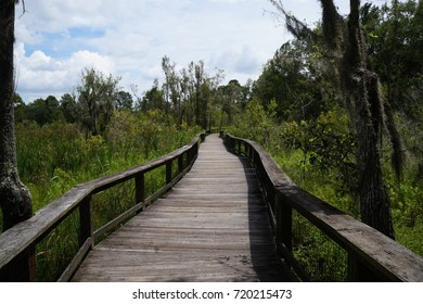 Audubon forest