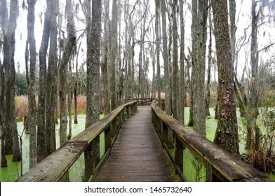 Audubon Swamp Garden on rainy summer day outside of Magnolia Planation in Charleston, South Carolina