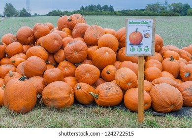 AUGSBURG, GERMANY - SEPTEMBER 16, 2016: Various pumpkins for self service sale at the field near Augsburg, Germany