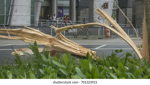 August 23, 2017, Hong Kong: Typhoon signal No.10, the highest in Hong Kong's storm warning system, is issued as Typhoon Hato hits the city. A tree near Tiu Keng Leng MTR station is seen broken.