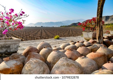 August 30, 2015 - Ica, Peru: Peruvian Pisco and wine production in the vineyards and wineries of Ica, on Peru's Southern Coast