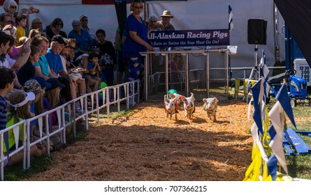 August 30, 2017, Oregon State Fair, Salem, Oregon.  These Adorable piglets were in a pig race at the State Fair, with an enthusiastic audience cheering them on.