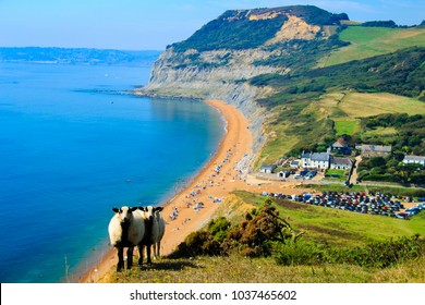 An August bank holiday walk from seatown in Dorset over Golden Cap Hill