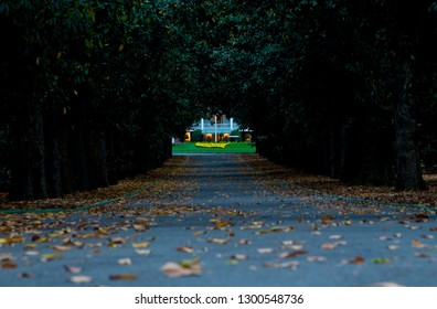 Augusta, Georgia/United States -Circa 2010:  Illustrative image of a view down Magnolia Lane at the front entrance of  Augusta National on Washington Road with focus on Founders Circle.