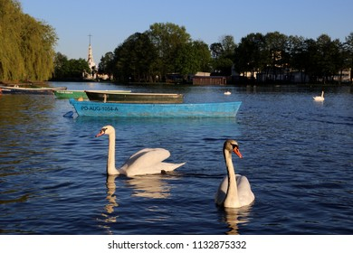 Augustow, Poland - 05.05.2018: Swans and boats on the lake in the city center.