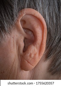 the auricle on the human head