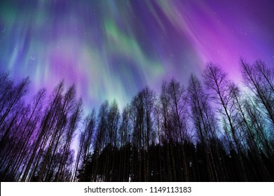 Aurora Borealis above boreal birch forest