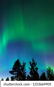 Aurora borealis, Northern lights, above treetops.