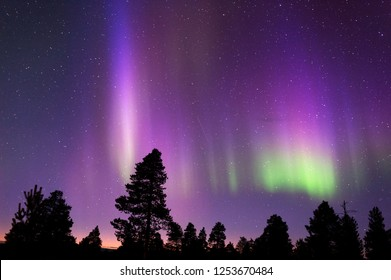 Aurora Borealis, Northern Lights, above boreal forest.