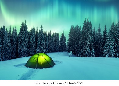 Aurora borealis. Northern lights in winter forest. Sky with polar lights and stars. Night winter landscape with aurora, green tent and pine tree forest. Travel concept