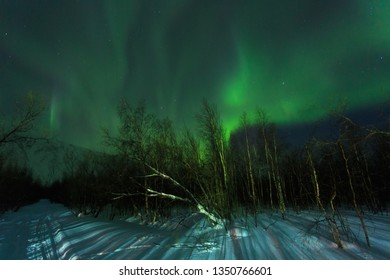 Aurora over the winter forest