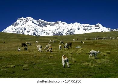 Ausangate mountain in Andes (Cordillera Vilcanota), Peru