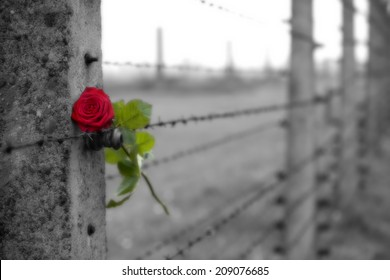 From Auschwitz II - Birkenau
