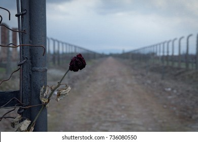 AUSCHWITZ, POLAND, 2017 ; Gate to the concentration camp auschwitz-birkenau. Barbed wire fence around the death camp in Oswiecim. He assumes people during the Holocaust in death camps.