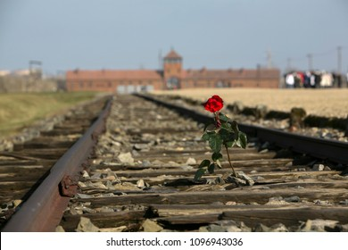 Auschwitz, Poland, March 31, 2009: red rose on the track to gate of the German  concentration camp Auschwitz Birkenau