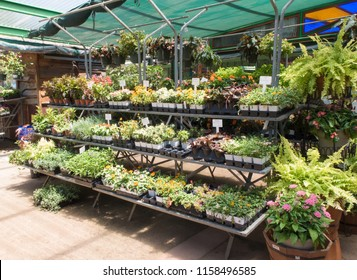AUSTIN, TEXAS - JULY 19 2018: partially shared rows of plants in a nursery
