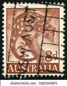 AUSTRALIA - CIRCA 1960: post stamp printed in Australia shows tiger cat on tree (quoll, dasyurus); Scott 321 8d brown; circa 1960
