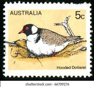 AUSTRALIA - CIRCA 1978: stamp printed by Australia, shows Hooded Dotterel, circa 1978