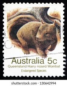 AUSTRALIA - CIRCA 1981: a stamp printed in the Australia shows Queensland Hairy-nosed Wombat, Lasiorhinus Krefftii, Marsupial Mammal, circa 1981