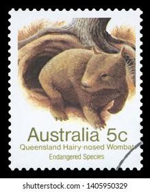 AUSTRALIA - CIRCA 1981: a stamp printed in the Australia shows Queensland Hairy-nosed Wombat, Lasiorhinus Krefftii, Marsupial Mammal, circa 1981.