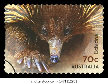 AUSTRALIA - CIRCA 2015: A used postage stamp from Australia, depicting an image of an Echidna, circa 2015.