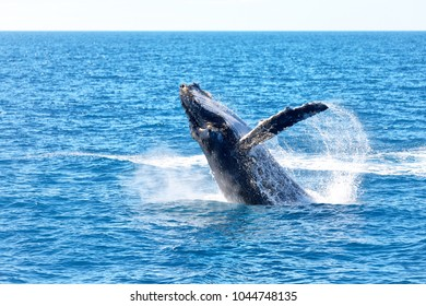 Australia a free whale in the ocean like concept of freedom