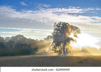 Australia Landscape : Sunrise in Yamanto