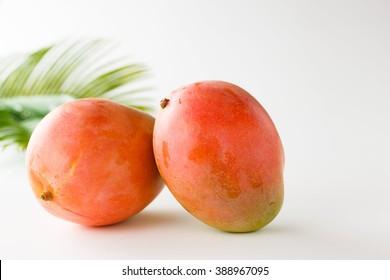 Australia mango