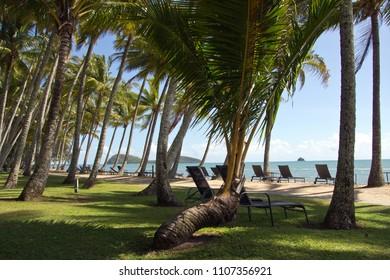 Australia, Queensland, Palm Cove, palm beach