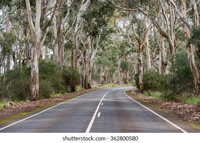 australia road in green eucalyptus forest in kangaroo island