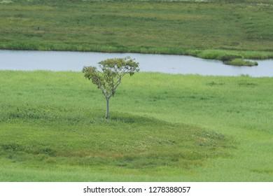 Australia, Winnellie. Window on the Wetlands Nature Reserve. Wetland habitat.